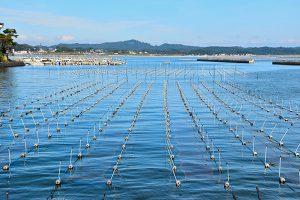 牡蠣養殖イメージ